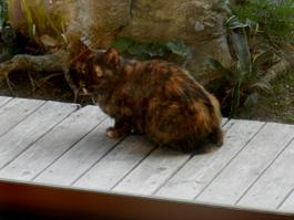 福岡県筑紫郡那珂川町Y様邸の猫ちゃんです。猫ちゃんの部屋を増築しました。